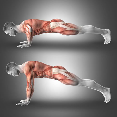 flexion: 3D render of male figure in push up pose highlighting the muscles used in the exercise