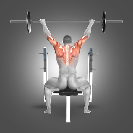 flexion: 3D render of a male figure in seated barbell press with arms raised position with muscles used highlighted Stock Photo
