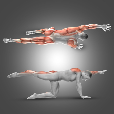 flexion: 3D render of a male figure in alternate armleg raise pose with muscles used highlighted