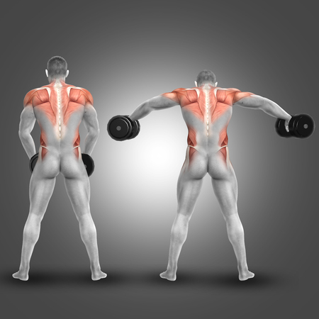 erector: 3D render of a male figure doing dumbbell standing lateral raise with muscles used highlighted