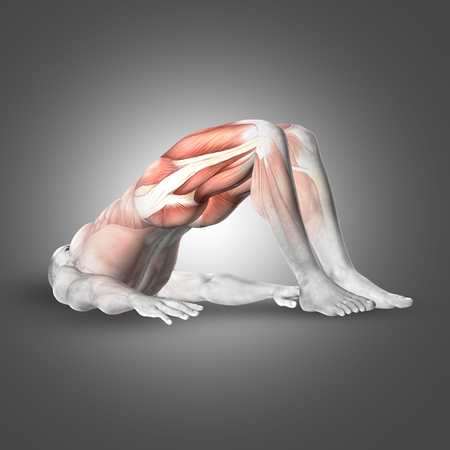 trapezius: 3D render of a male figure in double leg bridge pose with muscles used highlighted