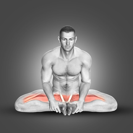 abductor: 3D render of a male figure in seated abductor stretch highlighting main muscles used Stock Photo