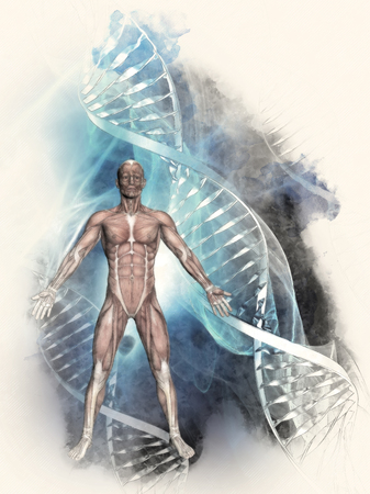 dna strands: 3D sketched image of a male figure with muscle map on a medical background with DNA strands