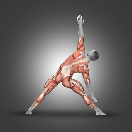 erector: 3D render of a male figure in triangle pose highlighting the muscles used in this exercise Stock Photo