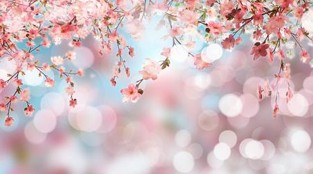fleur cerisier: 3D render de fleurs de cerisier sur fond défocalisé