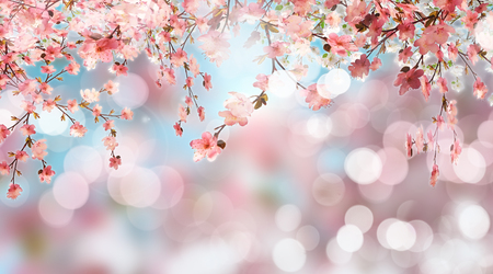cherry blossom: 3D render of cherry blossom on a defocussed background