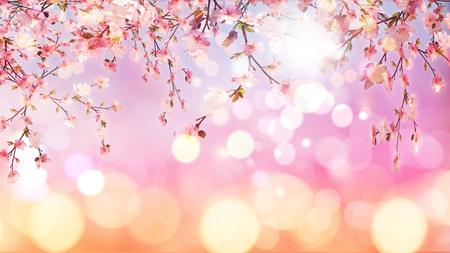 blossom background: 3D render of cherry blossom on bokeh lights background