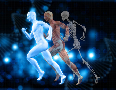microcosmic: 3D medical background with male figures in running pose with muscle map and skeleton Stock Photo
