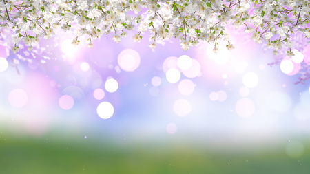 defocussed: 3D render of cherry tree blossom on a bokeh lights background