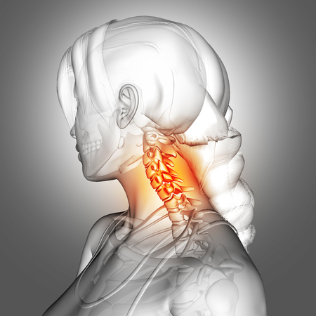 3D render of a female figure with neck bones highlighted