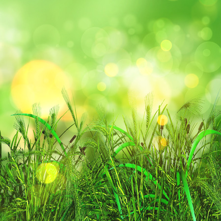 3D render of a green grass and wheat on a bokeh lights background Stock Photo