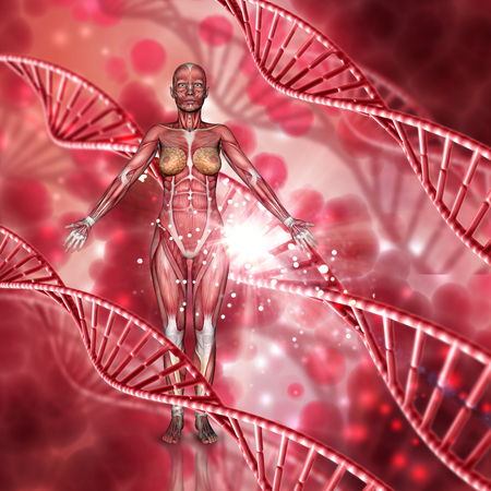 3D render of a female medical figure with muscle map on a DNA strands background