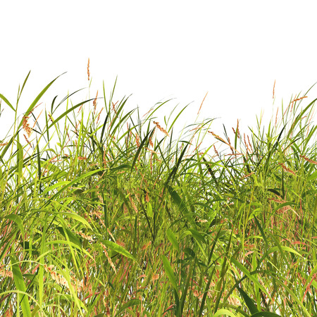 3D render of grass and weeds on a white background