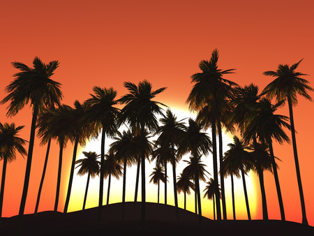 3D render of palm trees against a sunset sky