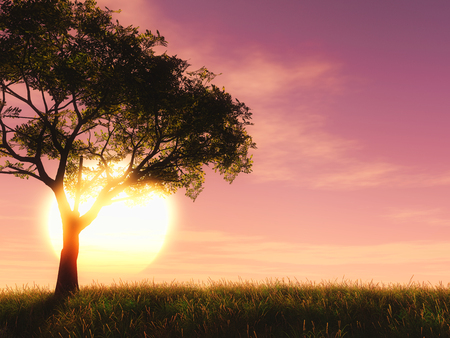 3D render of a tree against a sunset sky 写真素材