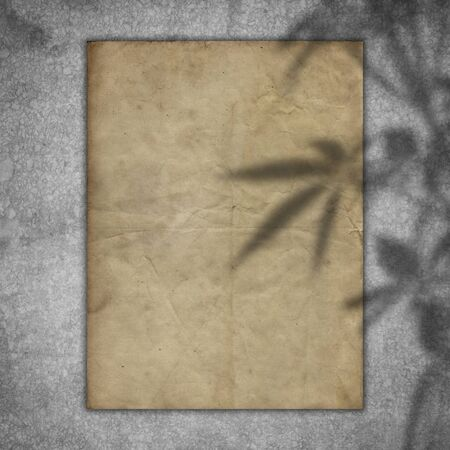Grunge paper on a concrete texture with a plant shadow overlay