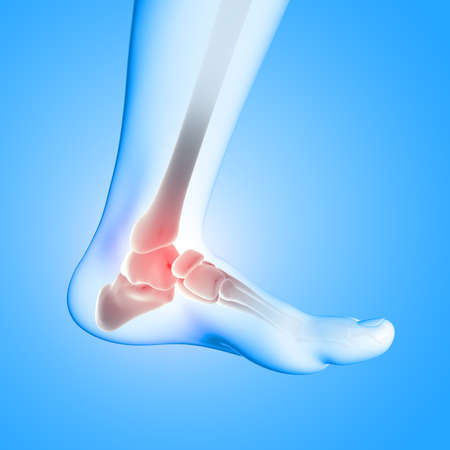 3D render of a medical image of close up of ankle bone in foot 版權商用圖片