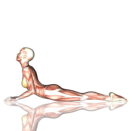 3D render of a female figure in yoga pose with muscle map 版權商用圖片