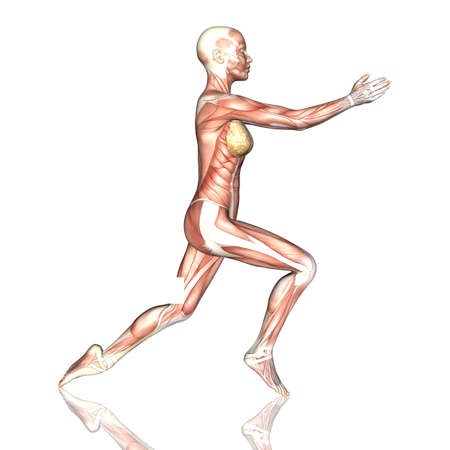 3D render of a female figure with muscle map in yoga pose