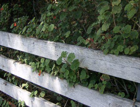 紅葉と白いフェンス