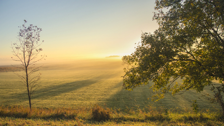 Morning light in a field with long shadows