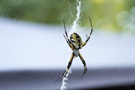 Een tuin of schriftelijk spin klaar in het midden van haar web
