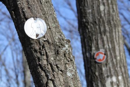 blazes: Trail blazes in a winter forest Stock Photo