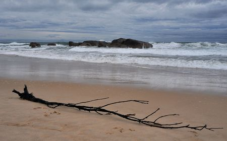 Cloudy day on a beach, rocks in the water and a large branch of a tree in the foreground Stock Photo