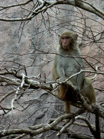 Monkey sitting on a branch of a tree