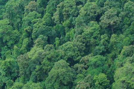 Rainforest- Lush Green Background of Rain Forest Trees, View from Above photo