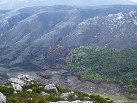 A distant view of a recent forest fire and untouched forest next to it. Western Arthurs, Tasmania.