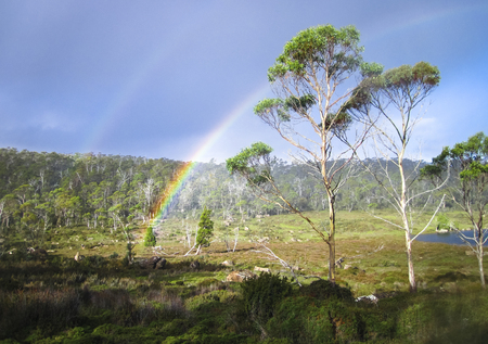 A double rainbow is seen over a group of eucalypt trees in the Walls of Jerusalem National Park, Tasmania. Stock Photo