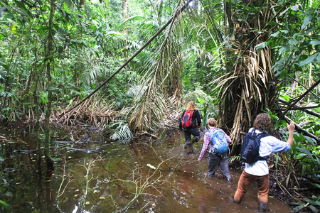 A group of wildlife surveyors walks through a flooded part of Tortuguero National Park, Costa Rica.