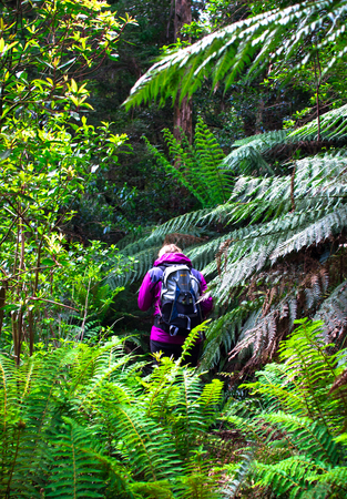 A hiker walks down a densely vegetated trail in the Yarra Ranges National Park, Victoria, Australia. Imagens