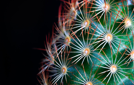 A small green cactus with bright orange spines is photographed up close in high detail.