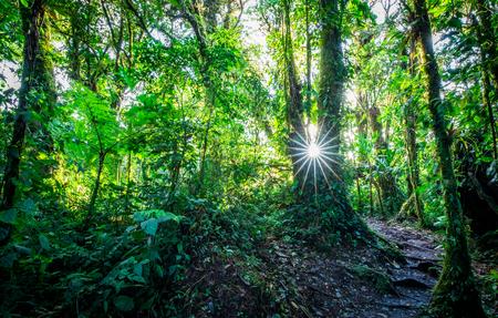 Nebelwaldlandschaft im dichten Dschungel. Santa Elena, Costa Rica.