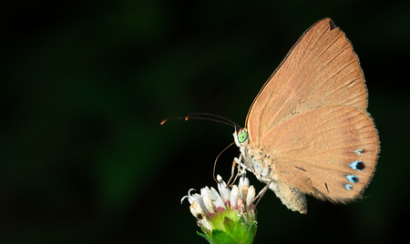 Butterfly feeding from a flower in Cahuita National Park, Costa Rica. Archivio Fotografico