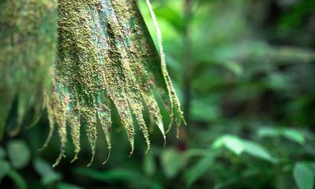 Moss and lichen cover this old leaf in the Tapanti-Macizo Cerro de la Muerte National Park, Costa Rica.