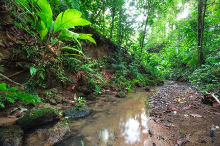 A small stream flows through dense jungle on the Osa Peninsula, Costa Rica.