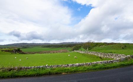 Stone walls surround grazing pastures for sheep on the island of Islay, Scotland, UK. Archivio Fotografico