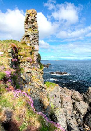 Pink flowers grow on large sea cliffs on the island of Islay, Scotland, UK.