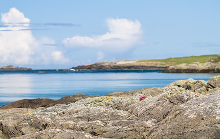 Pink flowers grow on the rocks at Port Wemyss on the island of Islay, Scotland. Stock fotó