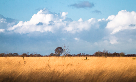 Large grassland with storm clouds in the distance and warm evening light. Whixall Moss, Shropshire, England.