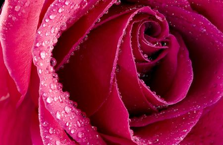 A macro shot of a lovely red rose with water droplets glistening on the soft curved petals.  Stock Photo - 1228645