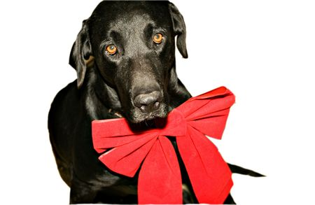 Series of dog photos with santa bows photo