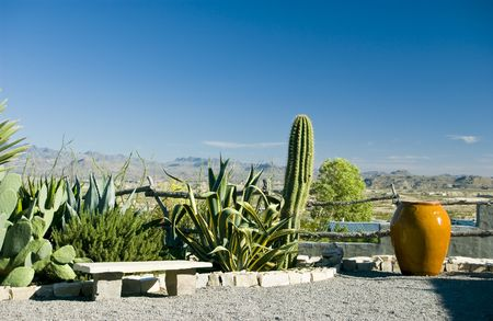 cylindrical: A lovely garden with cactus and other indigineous bordered with a large piece of pottery and a bench.