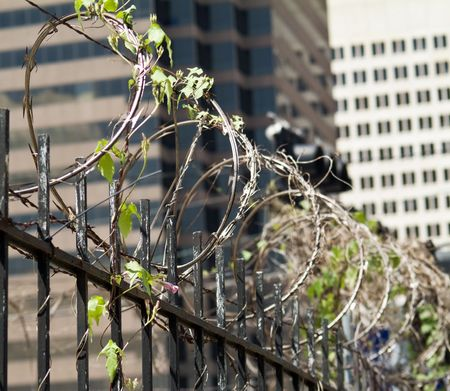 A city fence topped with razor sharp barbed wire with a flowering vine growing on it.   Stock Photo