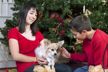 Two young people sitting by a Christmas tree petting their little dog.