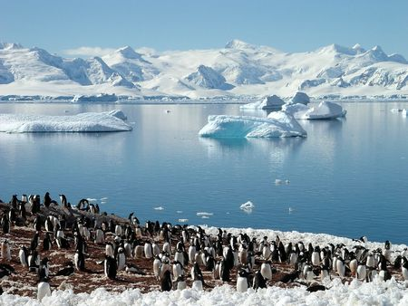 winter escape: Antarctic penguin group, reflection of icebergs, Antarctica