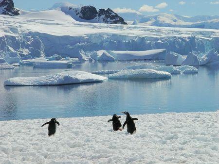 Antarctic penguin group, reflection of icebergs, Antarctica photo